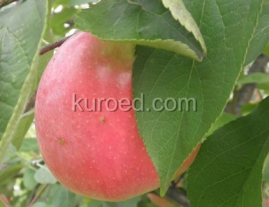 Яблочный и вишневый десерты – кулинарный рецепт